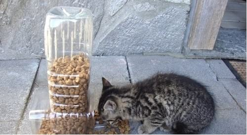 mangeoire pour chat bouteile plastique