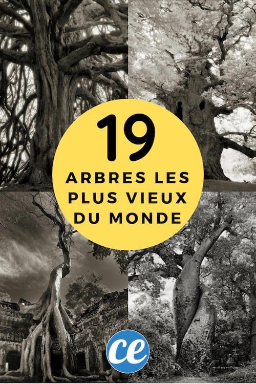 Les 19 arbres les plus vieux et les plus incroyables de la terre