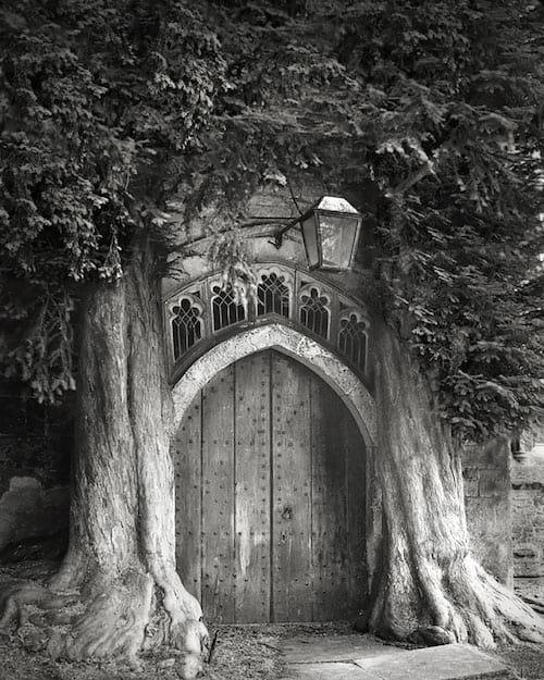 2 troncs d'arbres autour d'une vieille porte en bois