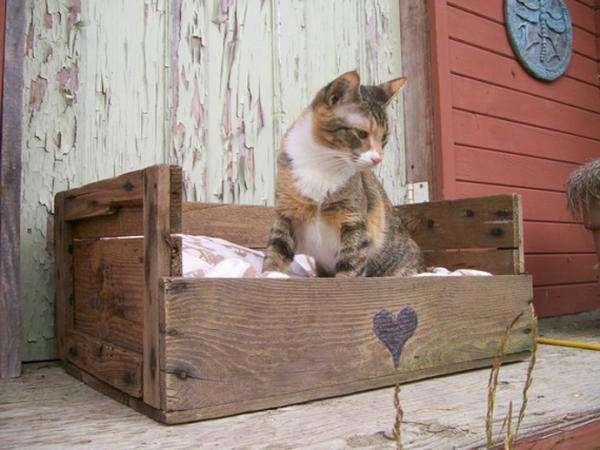 faire la niche du chat avec une palette en bois