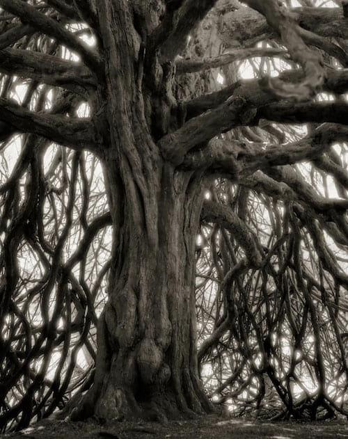Vieil arbre avec des branches qui font peur dans la forêt