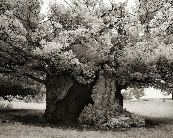 Incroyable vieil arbre fleuri
