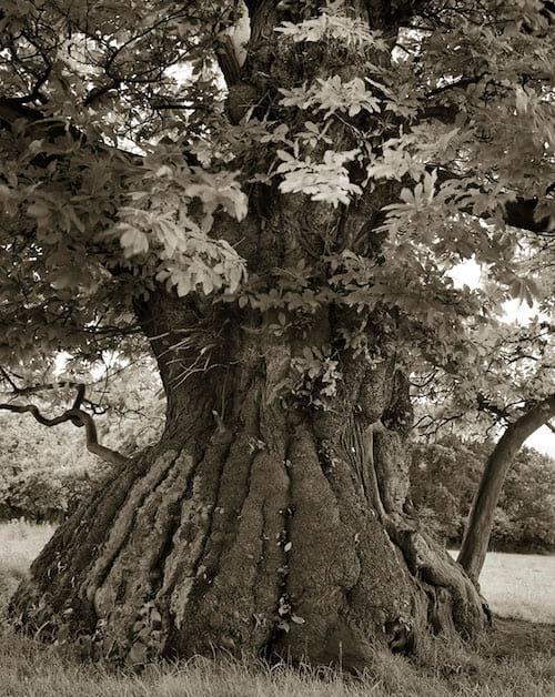 Vieil arbre en forme de cylindre