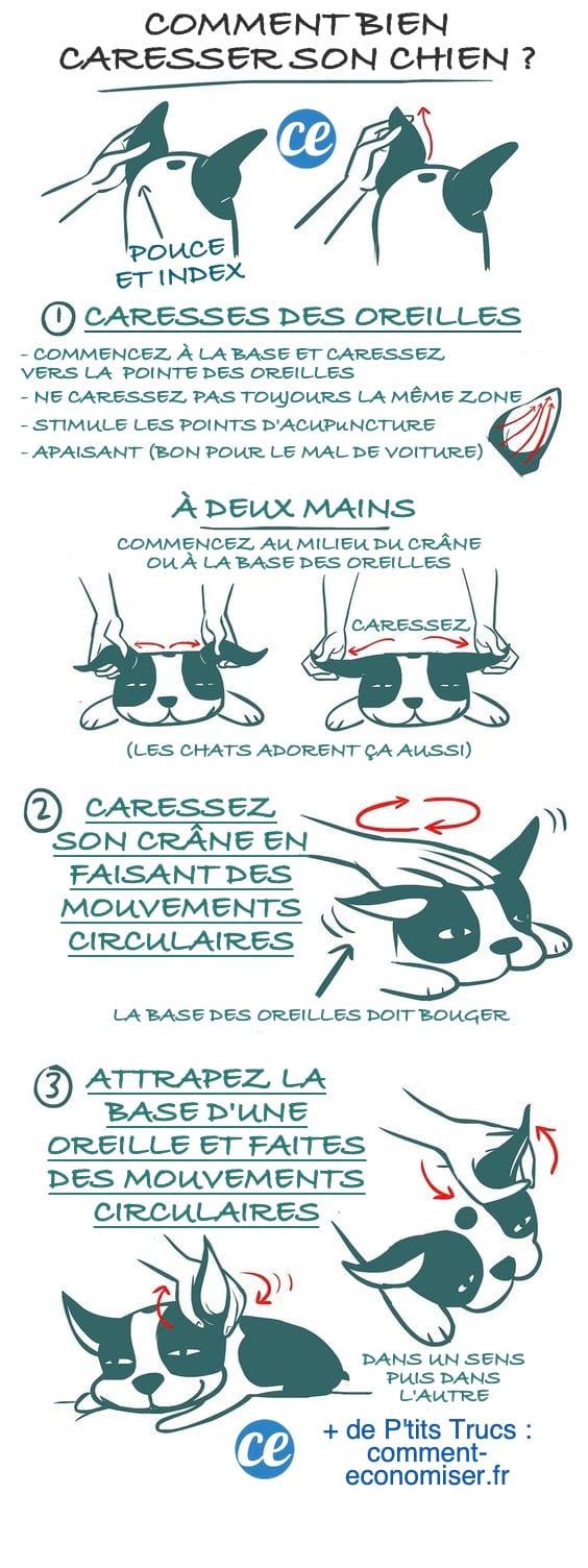 Comment caresser un chien ? Le guide facile que votre chien va adorer !