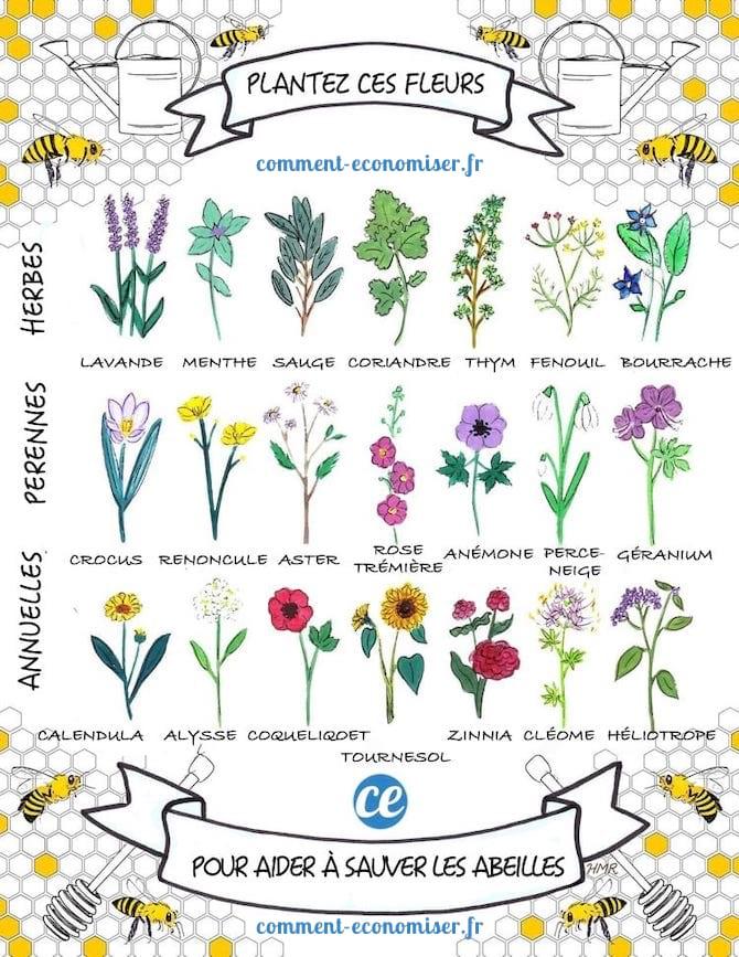Les fleurs mellifères à planter dans son jardin pour sauver les abeilles