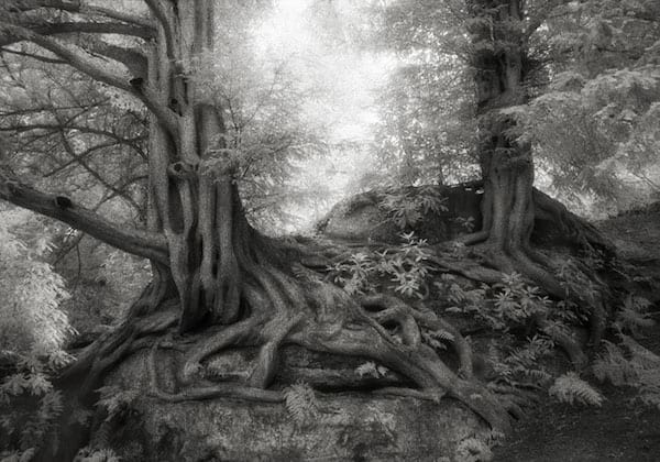 Bel arbre avec plein de racines dans la forêt