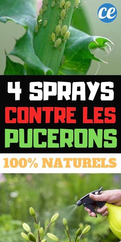 9 Sprays Anti-Pucerons Faits Maison (Efficaces Et 9% Naturels).
