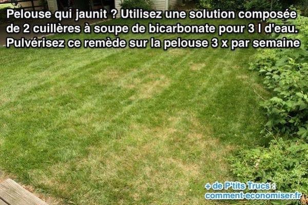 remede-pelouse-qui-jaunit-hiver.jpg