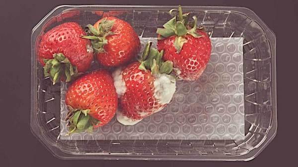 enlever la partie moisie des fraises