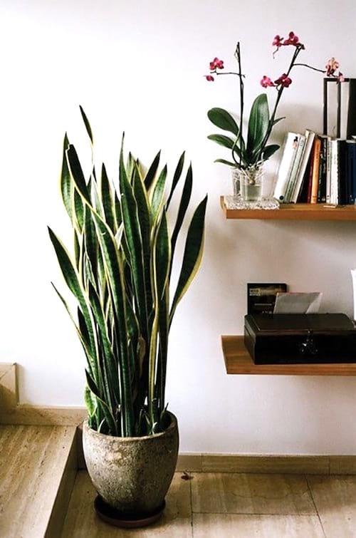 10 belles plantes qui n 39 ont pas besoin de soleil pour grandir. Black Bedroom Furniture Sets. Home Design Ideas