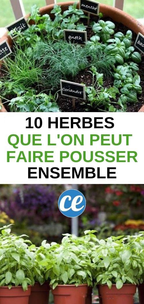 10 herbes aromatiques que vous pouvez faire pousser. Black Bedroom Furniture Sets. Home Design Ideas