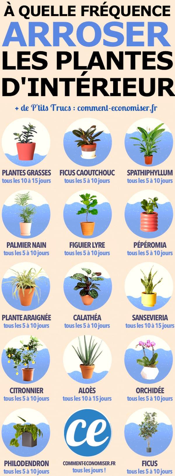 Découvrez le guide facile pour savoir quand arroser ses plantes d'intérieur.