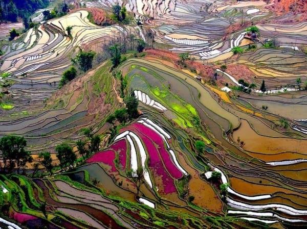 Magnifique rizières avec pleins de couleurs en Chine