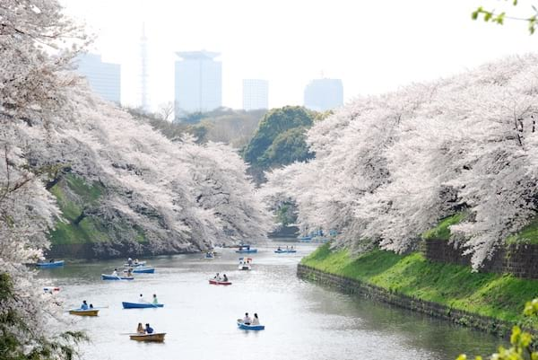 Jardin japonais pendant la saison des cerisier avec un lac et des personnes en bâteau
