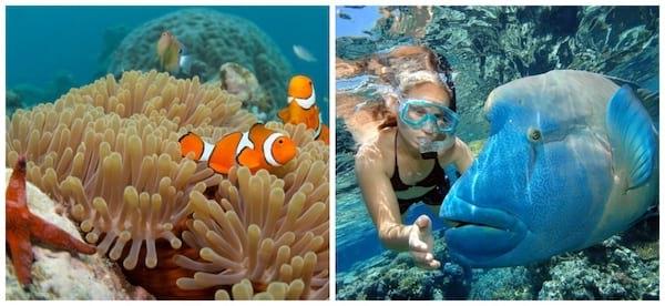 Plonger dans les couleurs incroyables de la Grande Barrière de Corail en Australie