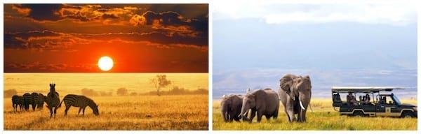 Deux magnifiques paysages dans la savane au Kenya avec le coucher du soleil