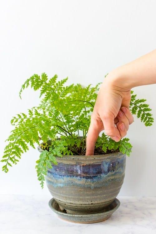 En cas de doute, le test infaillible pour savoir quand arroser vos plantes est de toucher la terre avec le doigt !