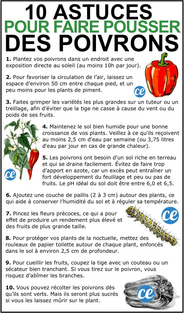 Découvrez les 10 astuces secrètes de maraîcher pour faire pousser des beaux poivrons.