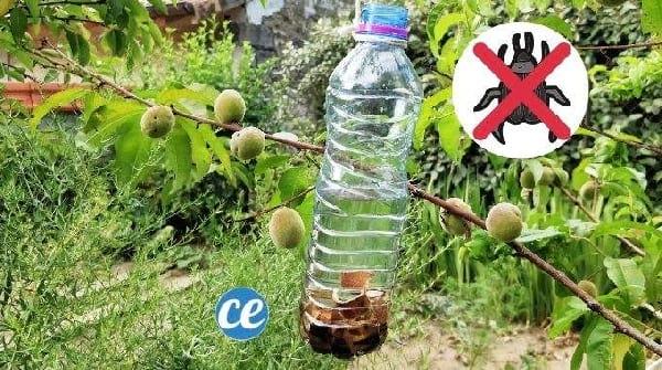 L'Astuce Infaillible D'un Jardinier Pour Chasser Les Insectes des Arbres Fruitiers