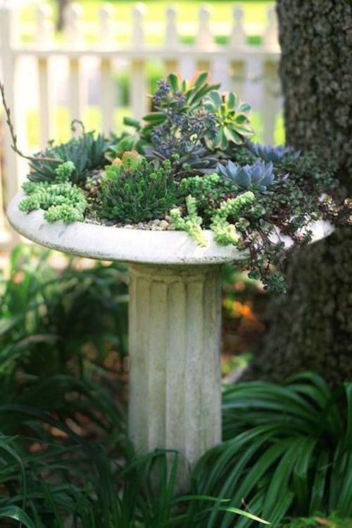 Des plantes servant de décoration