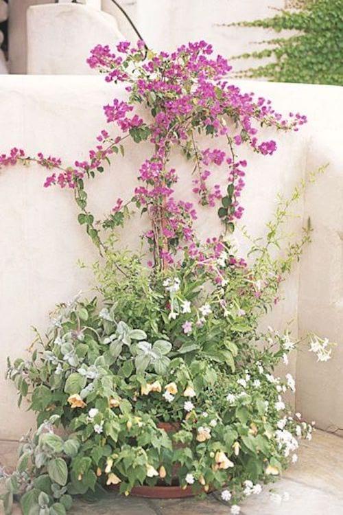 Des plantes grimpantes qui longent le mur