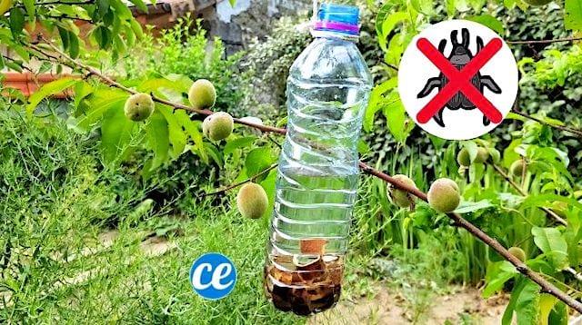 Le meilleur piège à insectes pour protéger vos arbres fruitiers
