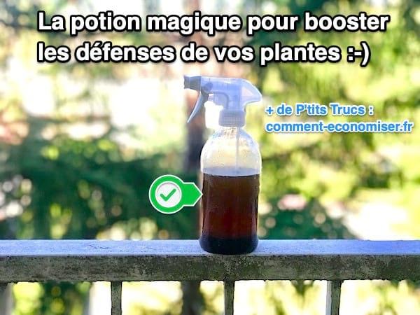 Potion magique pour booster les défenses de vos plantes naturellement