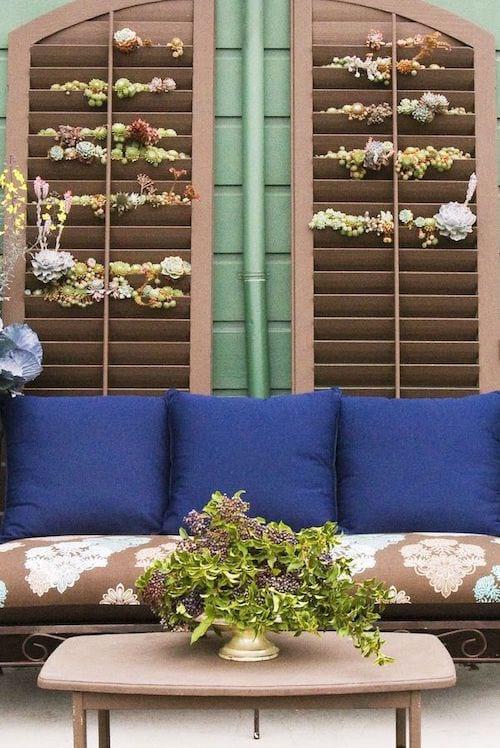 Deux volets contre un mur extérieur avec des plantes succulentes