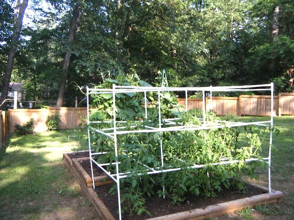 tuteur cage pour tomates tuyau PVC