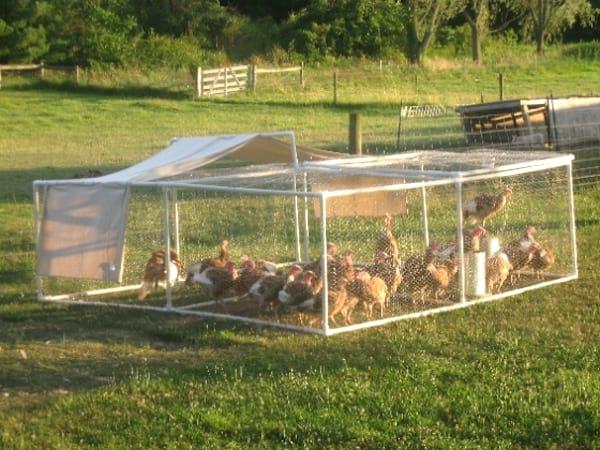 parc pour poules diy tuyau PVC