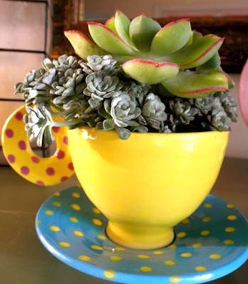 plante grasses dans une tasse de thé