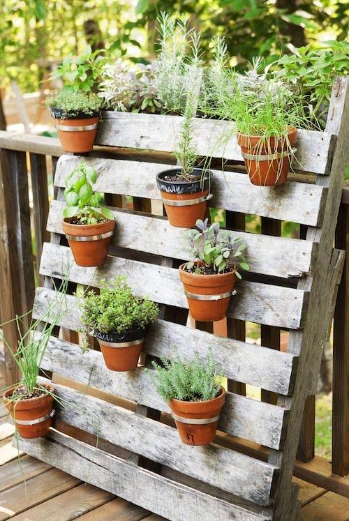 Des pots d'herbes aromatiques accrochés sur une palette