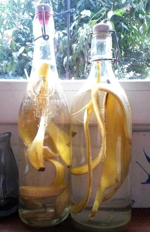 faire de l'engrais avec des peaux de banane
