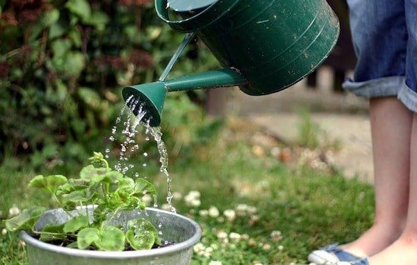 Pour sauver la planète, faites votre jardinage de manière écologique.