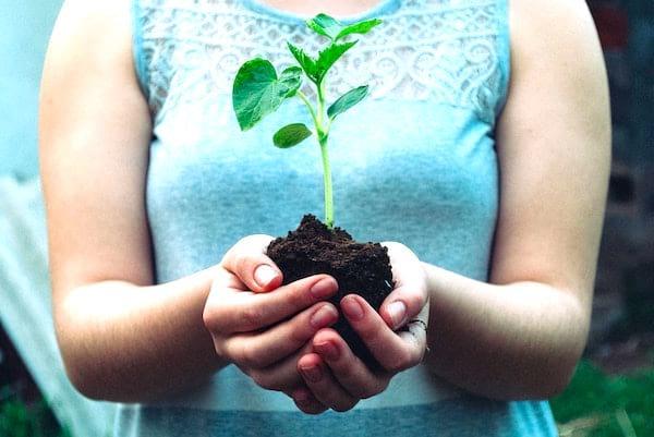 Pour sauver la planète, plantez un arbre.