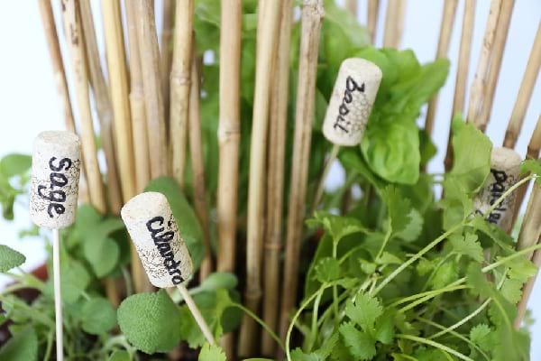 bouchon liege nom plantes