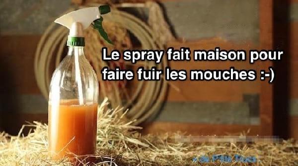 spray fait maison contre mouches