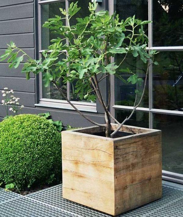 caisse en bois qui sert de pot pour un arbre