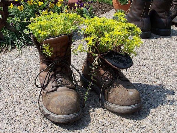 plantes grasses dans une vieille paire de chaussures