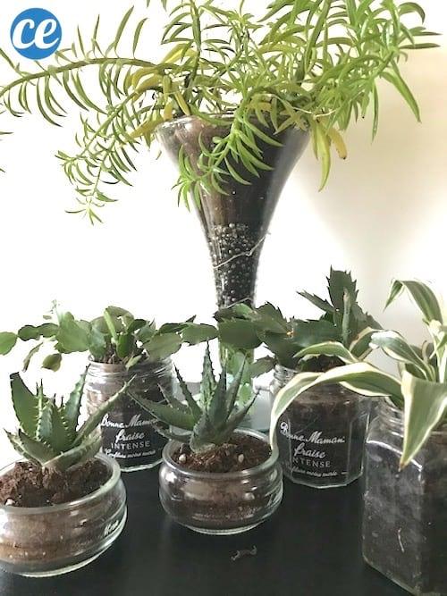 plante grasse dans un pot en verre de recup