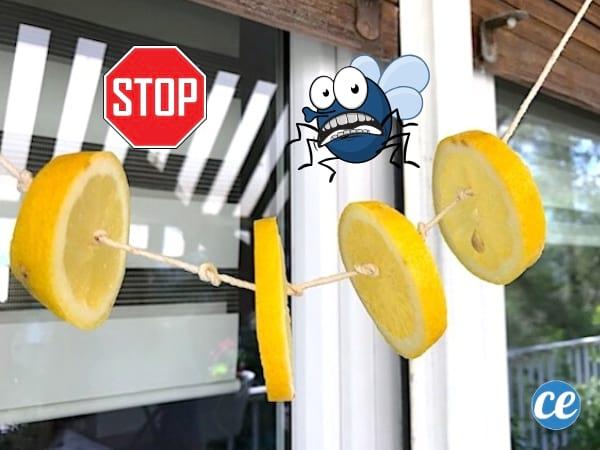 Répulsif naturel contre les mouches au citron