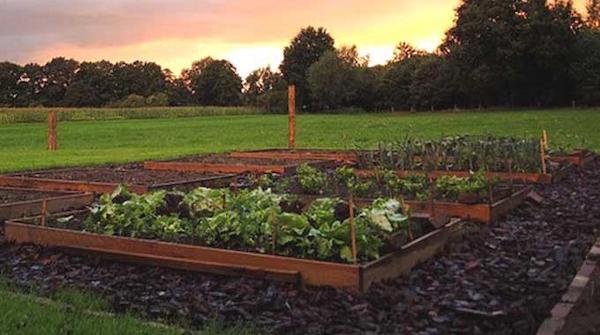 Un orto quadrato con lattuga