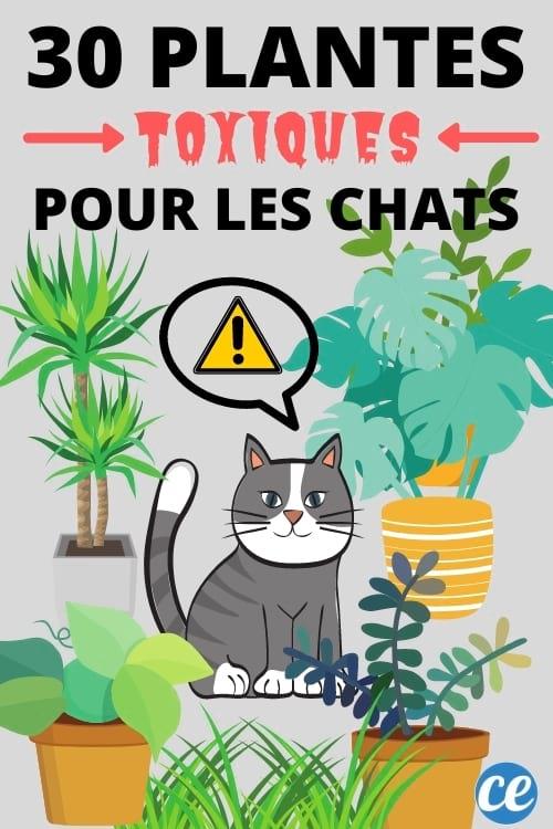30 plantes poisons pour les chats