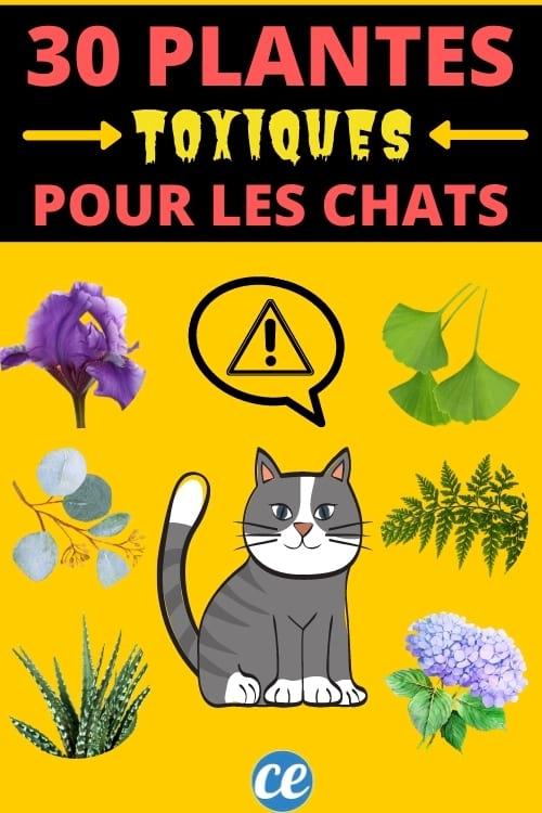 liste des plantes toxiques pour les chats