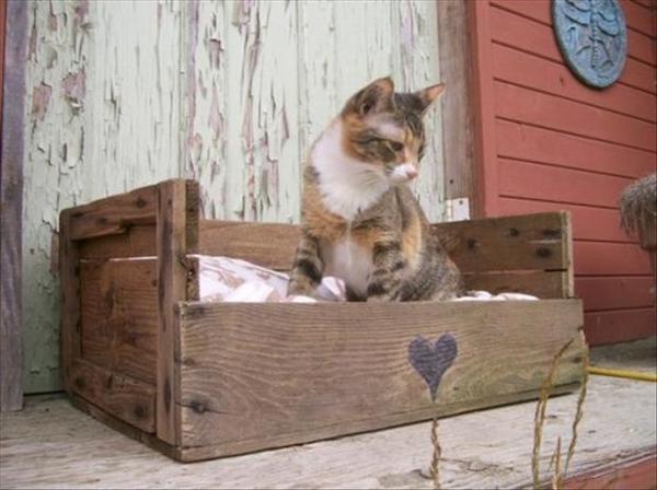 Petit chat dans une palette aménagée pour lui