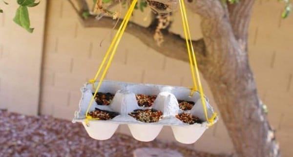 Graines d'oeuf dans une boîte d'oeuf suspendue