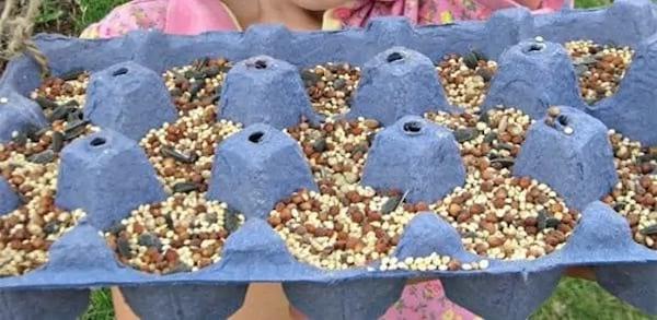 Nourriture pour oiseau dans boîte d'oeuf