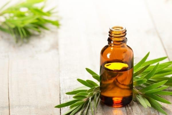 L'huile d'arbre à thé est un remède reconnu contre les boutons de fièvre.
