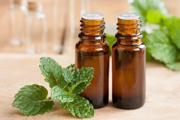L'huile de menthe poivrée est reconnue pour soigner les boutons de fièvre plus rapidement.