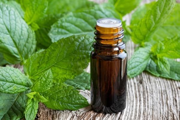 Flacon d'huile essentielle de menthe poivrée et fleur de menthe sur une table pour faire fuir les mouches